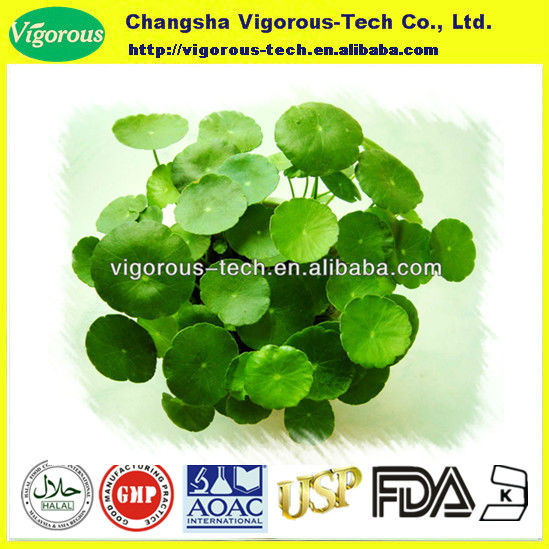 High quality gotu kola p.e./ centella asiatica extract