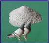/product-detail/gmp-certified-racing-pigeon-antibiotic-water-soluble-drugs-chemical-names-10-enrofloxacin-powder-60356741379.html
