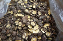2015 new crop IQF frozen shiitake mushrooms