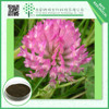 Chinese products wholesale 20% dark green powder red clover extract