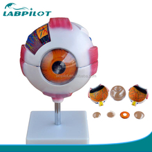 Human Giant Eye Model,Eyeball Anatomical Model