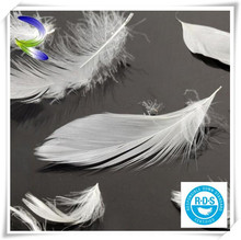 Wholesale white pure washed goose down feather for sale