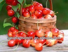 Hot Sale Acerola Cherry Extract Powder