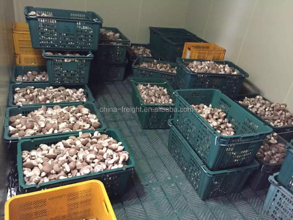 hot sale high quality milky mushroom
