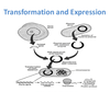 Prokaryotic Expression Protein Expression Services