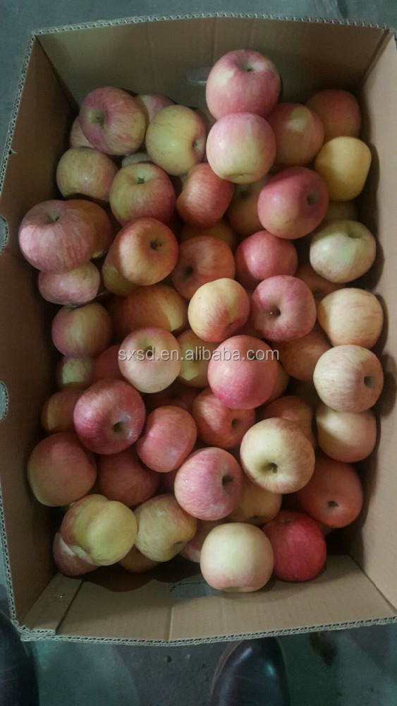 Fresh red fuji apple fruit import from china