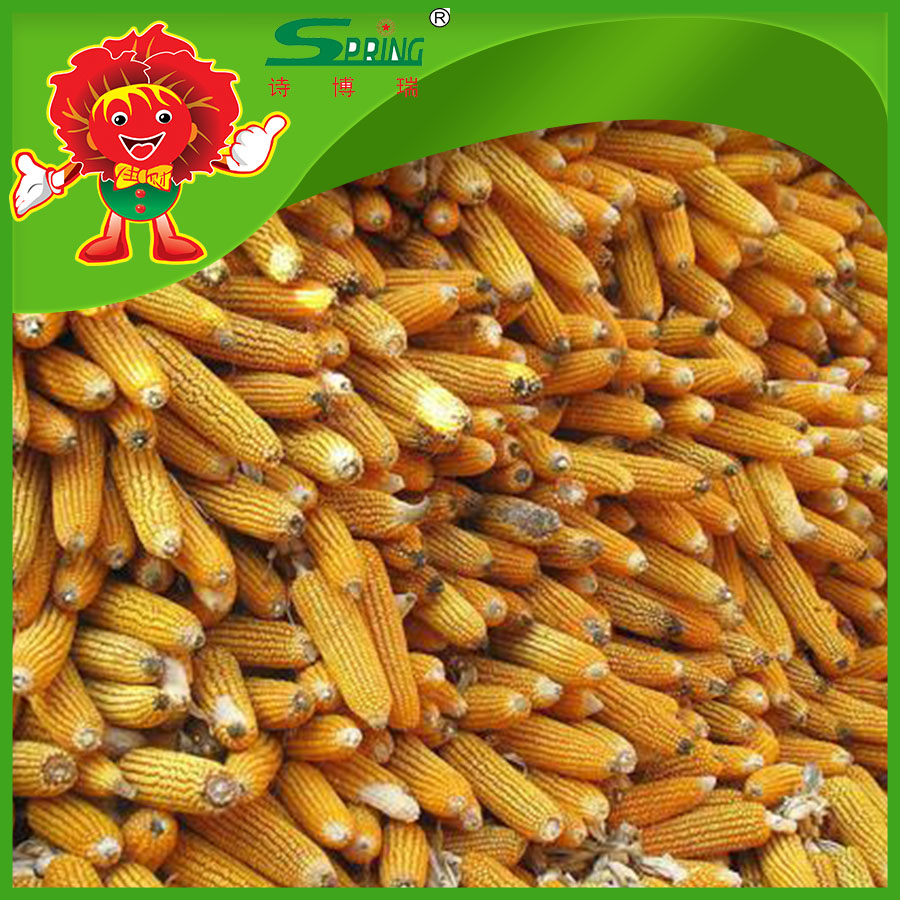 Animal feed yellow corn maize wholesale