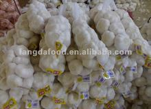 white garlic/ chiness natural garlic marketing price
