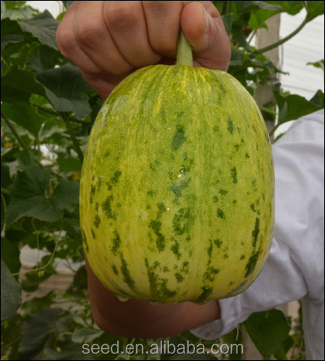 Hybrid Musk Melon Seed Flower Beauty