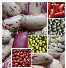 Bulk Dried White and Red Kidney Beans