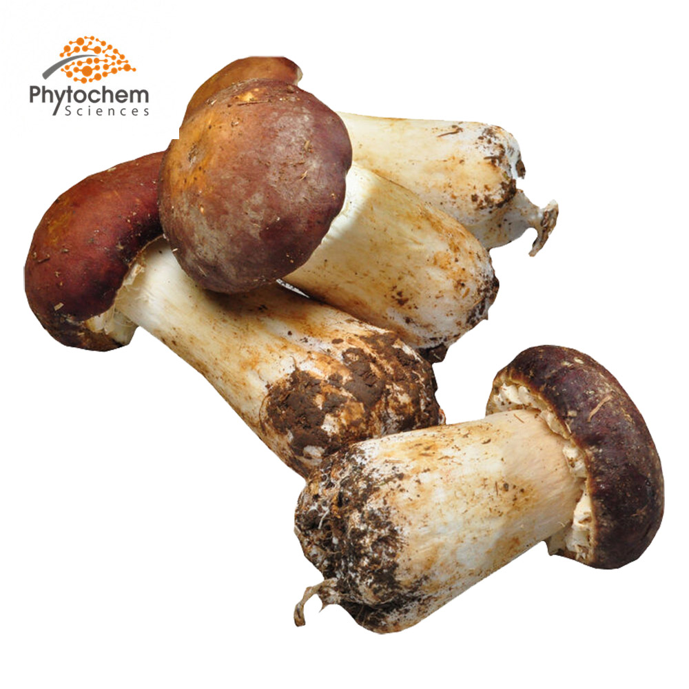 wholesale best food supplement powder agaricus blazei murill mushroom