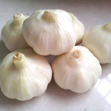 2017 Best Quality Pure White Solo Garlic