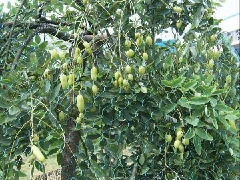 pea and bean net plant support net melon support net