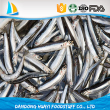 2016 new landing anchovy fish