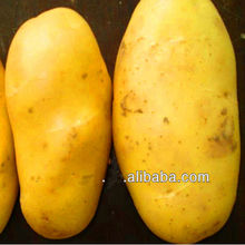 specification of potatoes