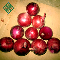 price for fresh whole red onion