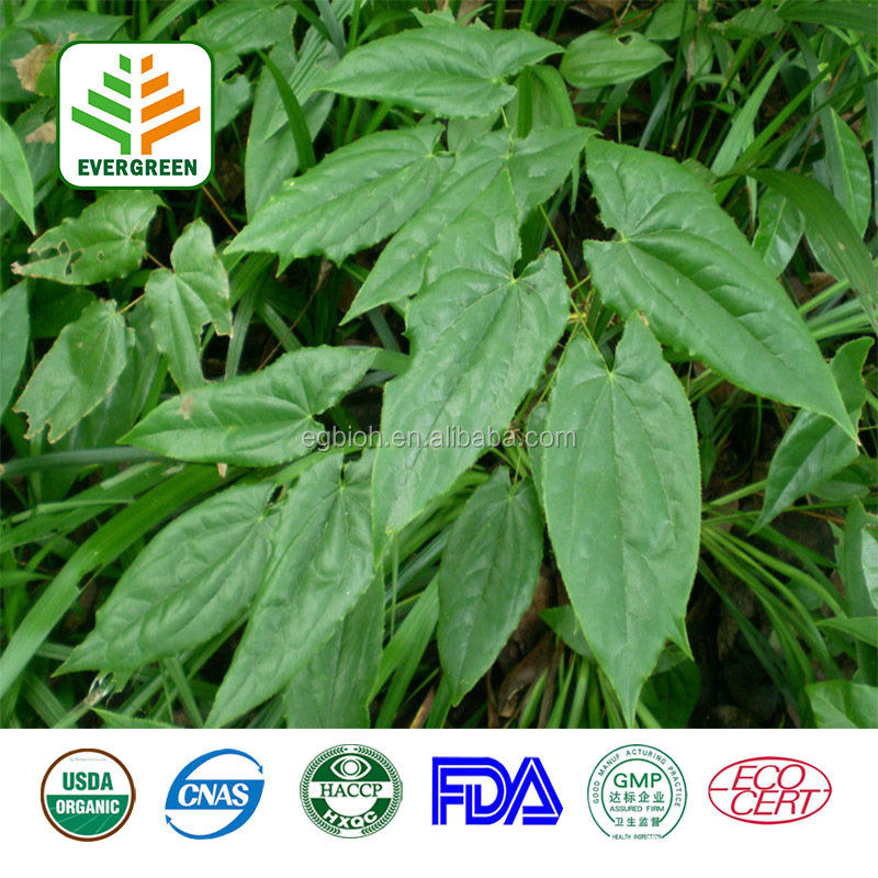 Hot sale factory supply Epimedium Sagittatum Extractt Icariin 10%-98% HPLC