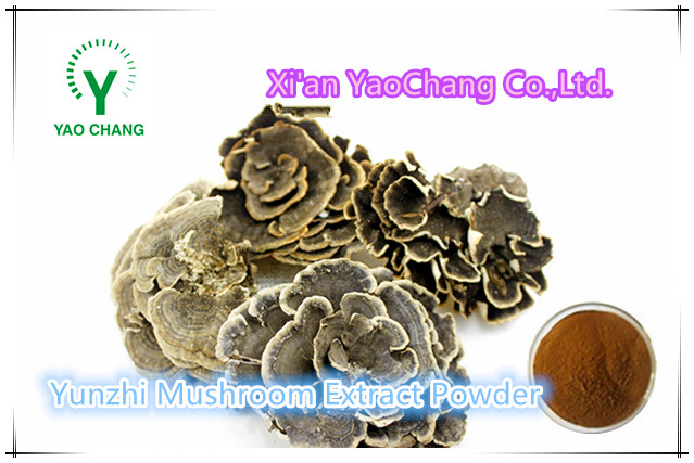 Liver Protection coriolus mushroom / yunzhi extract powder
