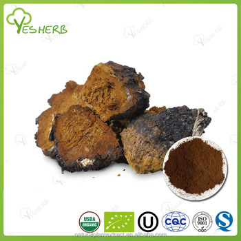Factory supply wild chaga extract powder chaga extract sale