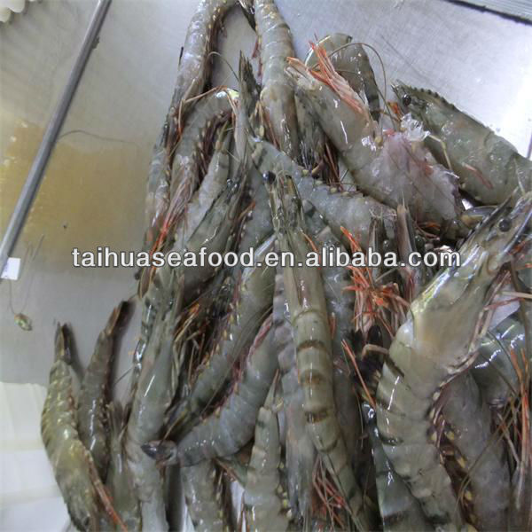 best quality frozen importer shrimp