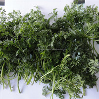 IQF frozen parsley