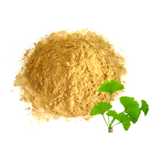 wholesale bulk herb chinese medicinal materials ginkgo biloba herbal powder
