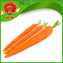 Bulk Fresh Indian Carrots directly from farm