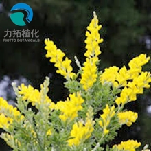 Top Quality Pure Natural Bulk Scotch Broom Extract/ Best Cytisine 98%