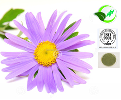 High Quality Echinacea Purpurea Extract With Good Price