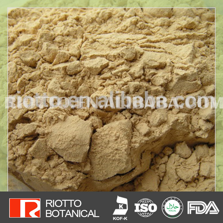 100% Natural angelica sinensis root extract