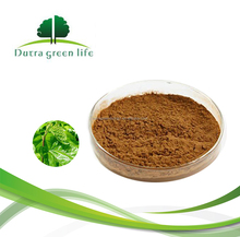 White Mulberry Leaf Tea Extract With High Quality