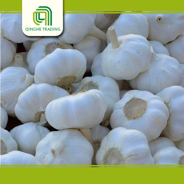 good brand garlic price in china high quality garlic with great price