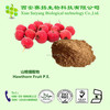 Hot Sale 100% Natural Hawthorn Fruit extract