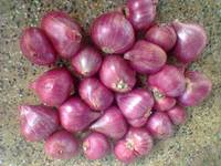 new crop 2014 fresh Red Shallot Onion