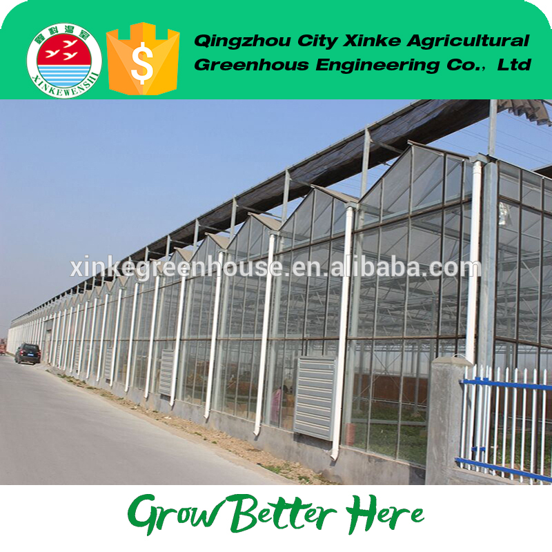 best price multi span greenhouse for farm With ISO9001 Certificate