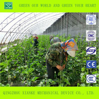100x8m Agricultural Plastic Tunnel Greenhouse for muskmelon