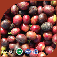 Grade AA green coffee bean robusta coffee bean price arabica rio minas coffee