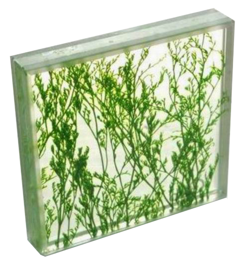 Toppro glass Handmade decorative safety glass with plant interlayer laminated glass