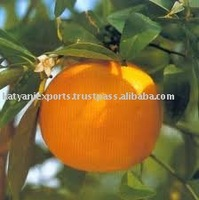 Top Selling Product of Grapefruit Essential Oil