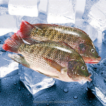 frozen tilapia fish factory processing