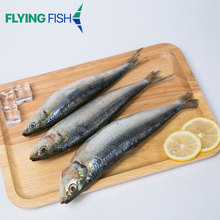 IQF wholesale seafood frozen all types of sardine fishes