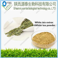 high quality natural Food Grade White Tea Powder Matcha/ White Tea Powder Extract