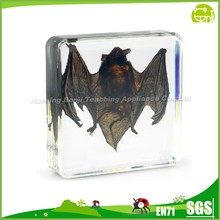 Bat in lucite arcylic block for Biology Teaching Educational Aids