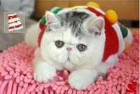 Christmas Tree Cat Clothes