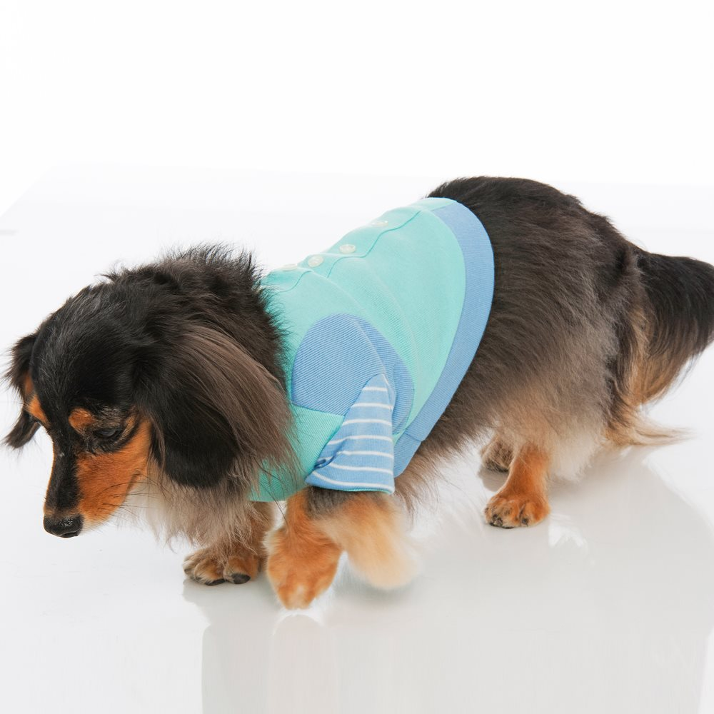 Fashionable ODM partnership Pet appliances Transparent Polyester Short Sleeve Cropped taiwan SMALL Cat/dog
