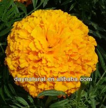Lutein From Tagetes Erecta/Eye Vitamin Lutein/Vision Advance Lutein