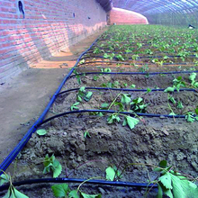 Drip irrigation system for Horticultural greenhouse