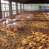 Fermentation bed Promote Healthy & Growth Popular in Ukraine feed grade probiotic bacteria for dairy use