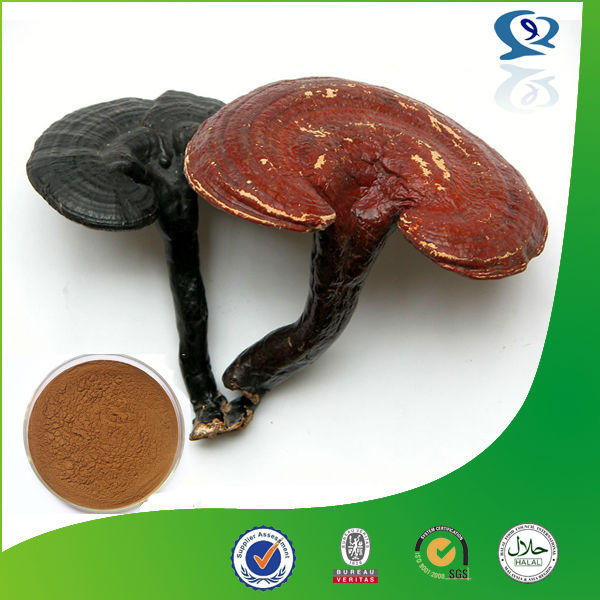 100% natural Sex products organic ganoderma lucidum extract organic duanwood reishi mushroom extract