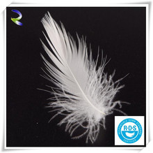 2-4CM Washed White Duck Feather